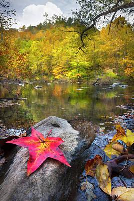 Photograph - Fallen Autumn Leaves by Debra and Dave Vanderlaan