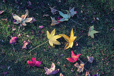 Photograph - Fallen Beauty #2 by Joseph S Giacalone