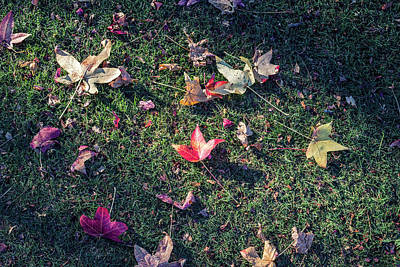 Photograph - Fallen Beauty #3 by Joseph S Giacalone