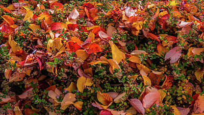 Photograph - Fallen Colourful Leaves In Autumn by Torbjorn Swenelius