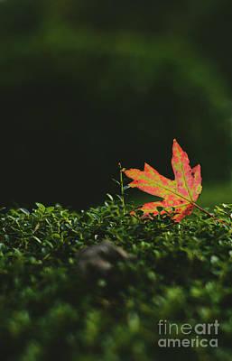 Photograph - Fallen Leaf - Ga by Adrian DeLeon