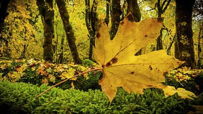 Photograph - Fallen Leaf by Jean Noren