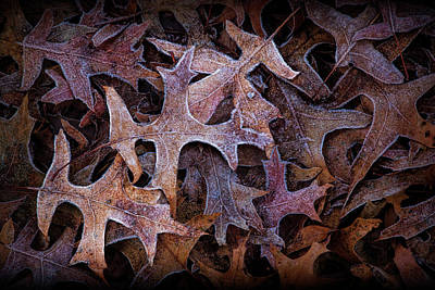 Photograph - Fallen Leaf Shapes And Patterns On A Frosty Morning by Randall Nyhof