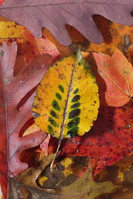 Photograph - Fallen Leaves by Daniel Reed