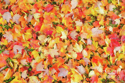 Photograph - Fallen Leaves by Ed Taylor