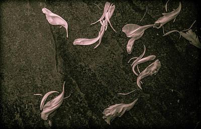 Photograph - Fallen Petals by Traci Asaurus