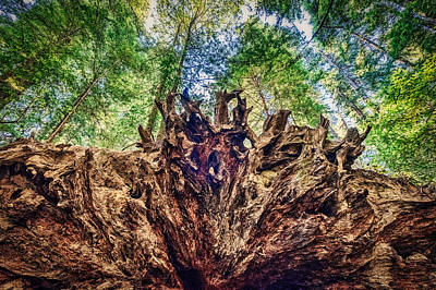 Photograph - Fallen Redwood Tree Roots by Stuart Litoff