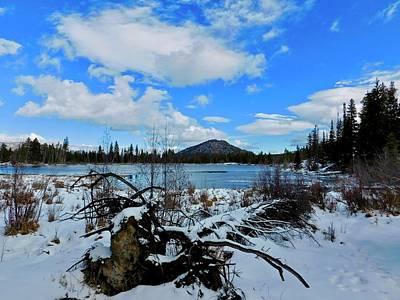 Photograph - Fallen Timber by Dan Miller