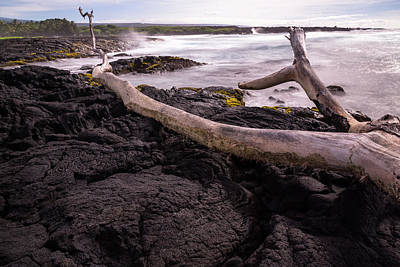 Fallen Tree At Punalu'u Beach Art Print