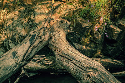 Photograph - Fallen Tree by Jeanette Fellows