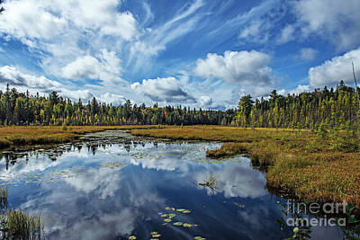 Photograph - Falling For Algonquin by Nina Stavlund