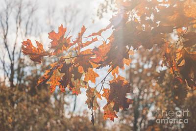 Photograph - Falling Sun Flare by Sheila Skogen