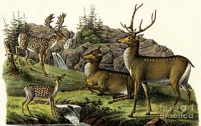 Painting - Fallow Deer, 1824 by Karl Joseph Brodtmann