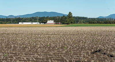 Photograph - Fallow Whatcom Field by Tom Cochran