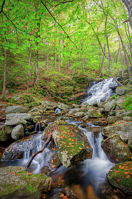Photograph - Falls Brook 2018 by Bill Wakeley