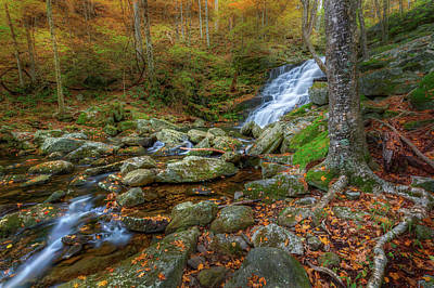 Photograph - Falls Brook Autumn by Bill Wakeley