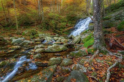Photograph - Falls Brook Autumn by Bill Wakeley