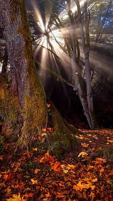 Photograph - Fall's Light by Jason Brooks