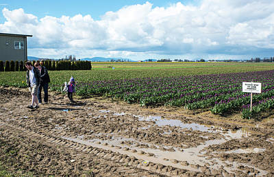 Photograph - Family In Mud With Purple Tulips by Tom Cochran
