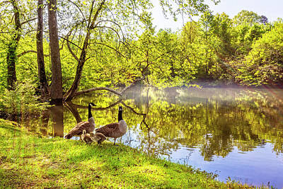 Photograph - Family Of Geese by Debra and Dave Vanderlaan