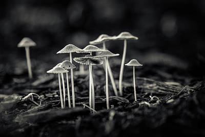 Black And White Art Photograph - Fanciful Fungus-2 by Tom Mc Nemar