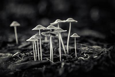 Mushroom Wall Art - Photograph - Fanciful Fungus-2 by Tom Mc Nemar
