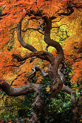 Photograph - Fantasy Nature by Stewart Helberg