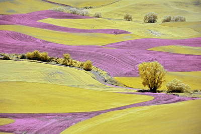 Royalty-Free and Rights-Managed Images - Fantasy Palouse by Jon Glaser