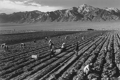 Photograph - Farm, Farm Workers, Mt. Williamson In by Buyenlarge
