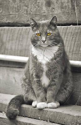 Photograph - Farm Feline by JAMART Photography