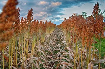 Photograph - Farm Field by Dan Urban