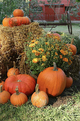 Photograph - Farm To Table Harvest Bounty by Jeff Folger