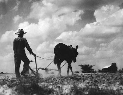 Photograph - Farmer And Mule by Fpg