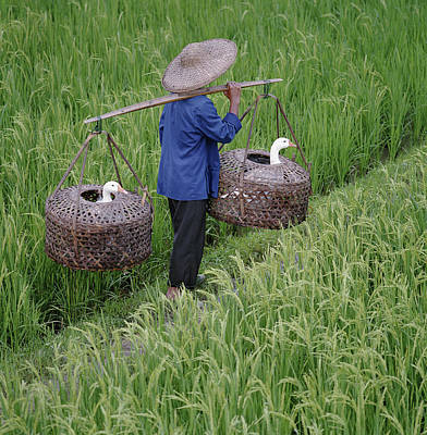 Photograph - Farmer Carrying Geese In Baskets by Martin Puddy