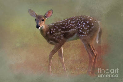 Animal Watercolors Juan Bosco Royalty Free Images - Fawn Royalty-Free Image by Geraldine DeBoer