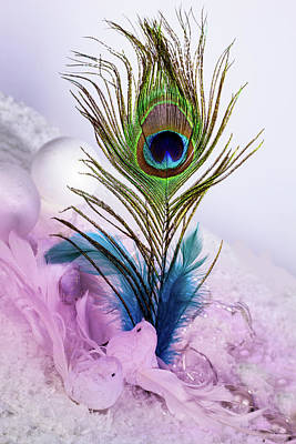 Photograph - Feather Colour by Christine Sponchia