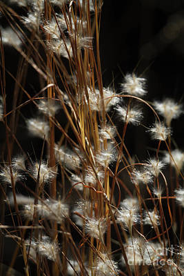 Photograph - Feathery Flora by David Cutts