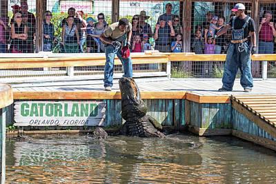 Photograph - Feeding The Alligators At Gatorland by Jim Vallee