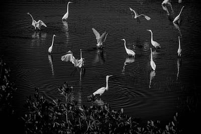 Photograph - Feeding Time by Dan Friend