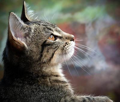 Photograph - Feline Dreaming by Jean Noren