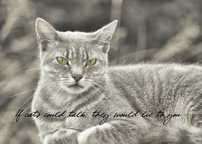 Photograph - Feline Moment Quote by JAMART Photography
