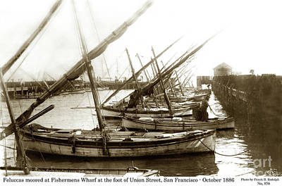 Photograph - Feluccas At Fisherman's Wharf, Foot Of Union Street, San Franc by California Views Mr Pat Hathaway Archives