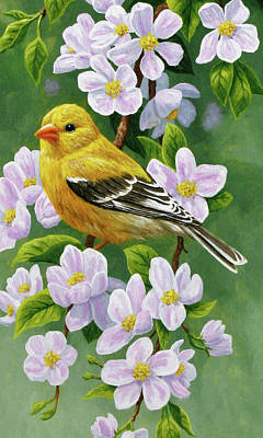 Female American Goldfinch And Apple Blossoms Original