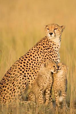 Togetherness Photograph - Female Cheetah Acynonix Jubatus With by Winfried Wisniewski