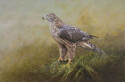 Art Print featuring the painting Female Goshawk Paintings by Alan M Hunt