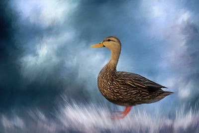 Photograph - Female Mallard Duck by Kim Hojnacki