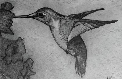 Drawings Royalty Free Images - Female Ruby Throated Hummingbird Royalty-Free Image by Michael Panno