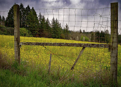 Photograph - Fenced In Flowers by Jean Noren