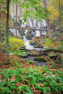 Photograph - Fern Falls by Bill Wakeley