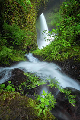 Royalty-Free and Rights-Managed Images - Fern Falls by Darren White